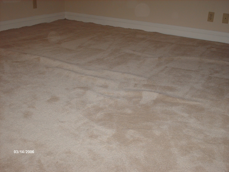 lose-carpet-copy