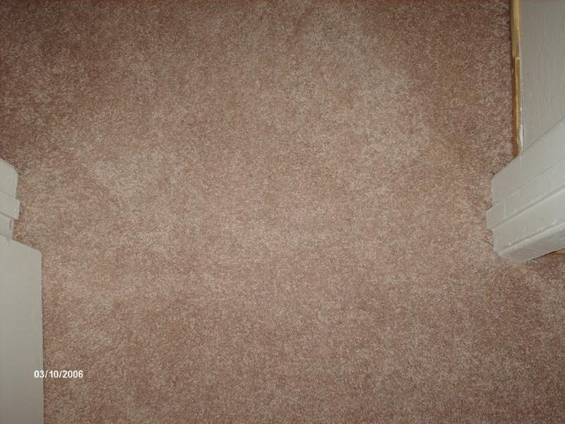 pet-dug-the-carpet1